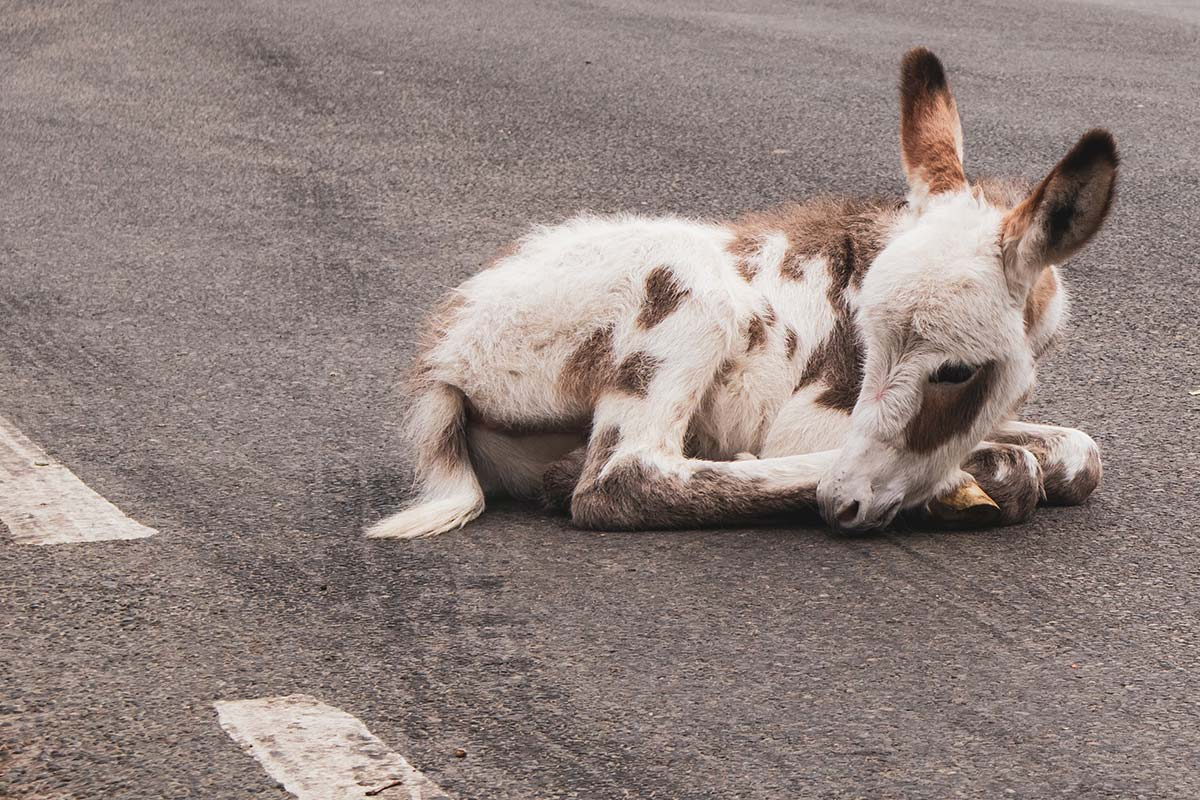 Donkey Laws God Pointing Blog Martin Young